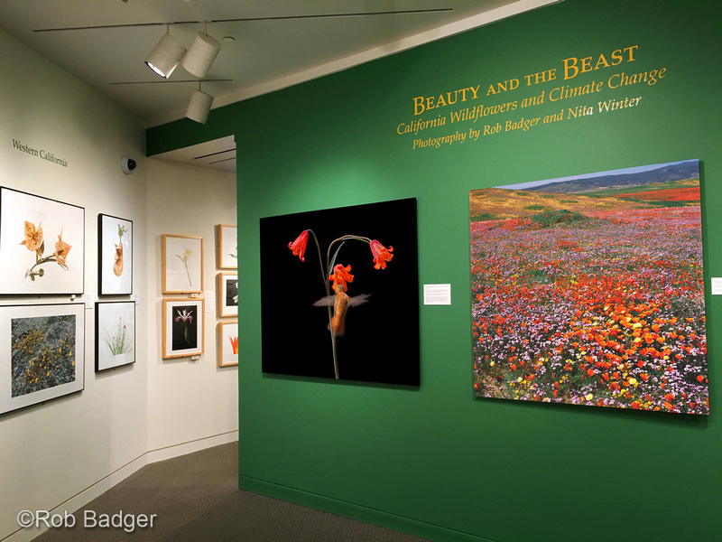Front of gallery_SFPLibrary_03_2016_IMG_0942_x1200