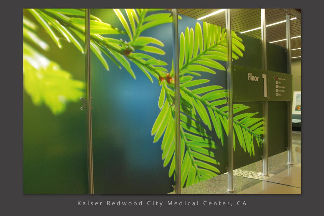 redwood needles sky 01 Kasier redwood city ca Healthcare slideshow copy