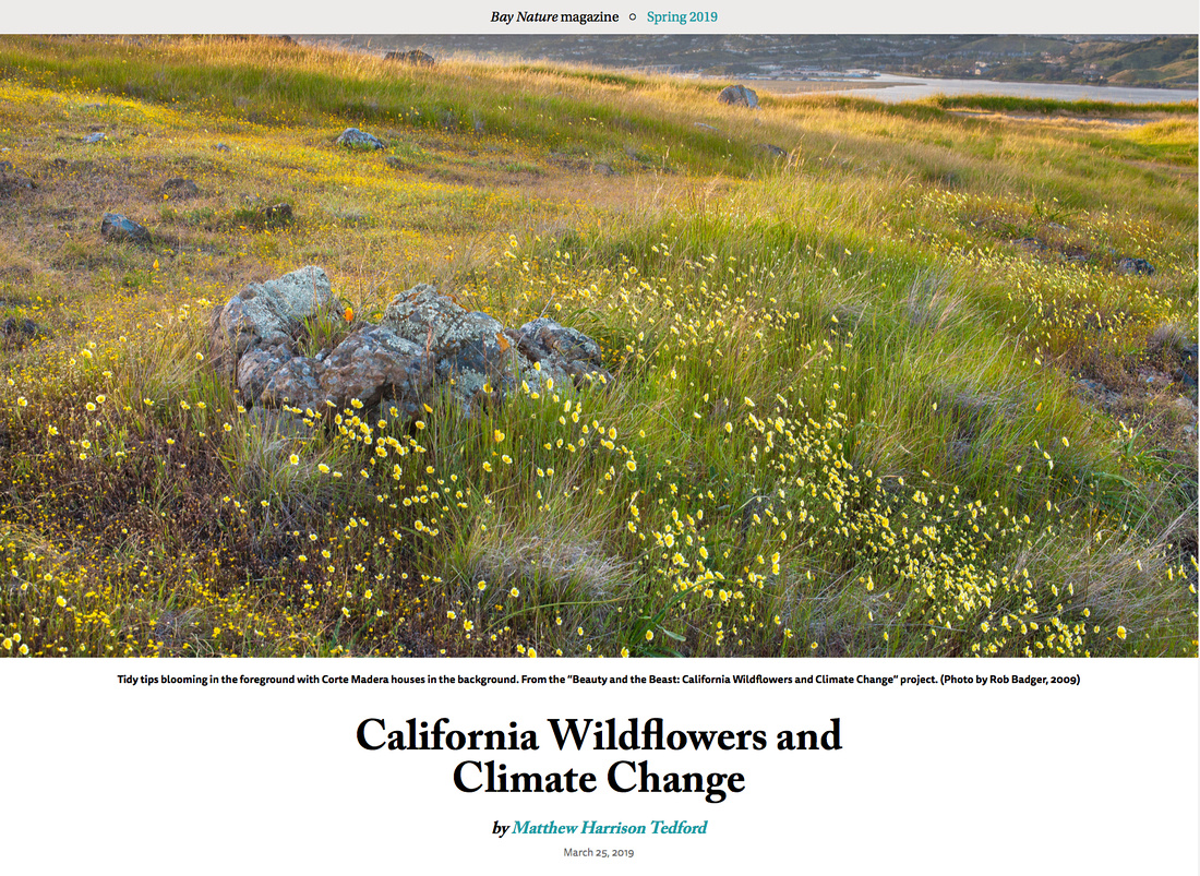 Bay Nature Magazine Article