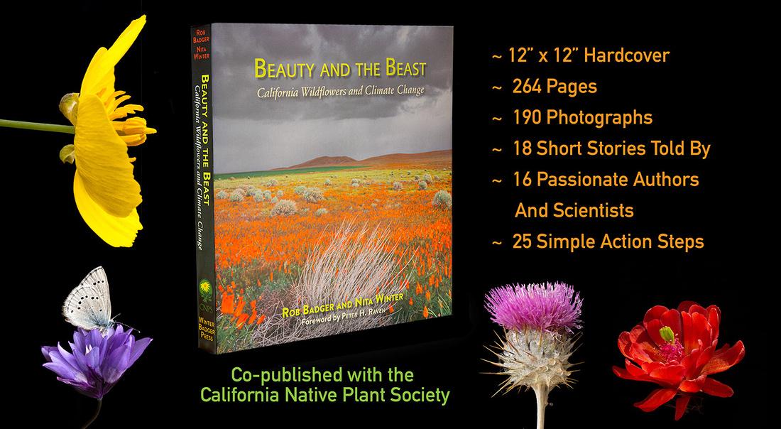 BATB book with specs black_x1550