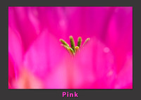 pink_flower_color pallette