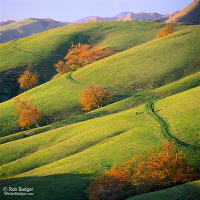 Sycamore Trees and new grass at sunset and distant Santa Lucia Range San Luis Obispo County California USA Rob Badger