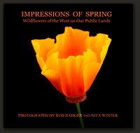 cover_impressionsofspring_webbackground_7x7