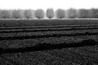 tilled_soil_bare_trees_wasco_ca_MK3B0152_x1550_BW