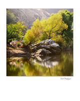 Cottonwood Tree Reflected in Kern River, Southern California