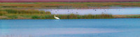 White egret at dusk in wetlands, Woodbridge Nature Preserve, California_X1_0371_pano