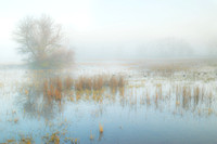 Tree in fog with yellow reeds and coots_DSC1830