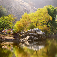 Reflections of a Cottonwood tree_Populus fremontii_in fall foliage on the Kern River_Kern River Gorge_Sequoia National Forest_Sierra Nevada Mountains_California_Rob Badger