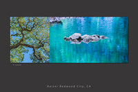 kaiser redwood city_teal_tree_water