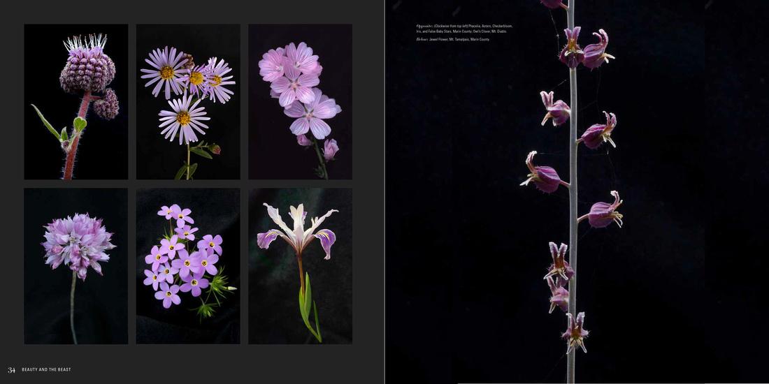 Jewel flower layout_BATB_x1200