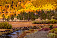 Sunrise on Aspen Trees in Fall Foliage, Hope Valley,Toiyabe National Forest, Sierra Nevada Mountains, California_MK3A1651_Rob Badger