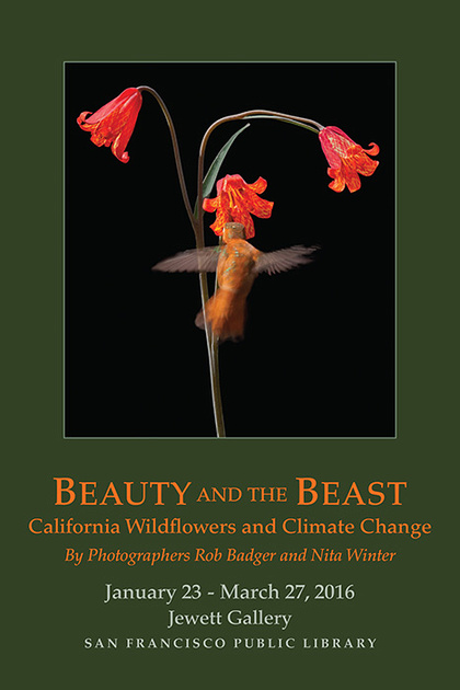 "Exhibit: ""Beauty and the Beast: California Wildflowers and Climate Change"", Hahnemuhle, ""Think Tank Photo,"" ""San Francisco Public Library"", photography, fine art, exhibit, CNPS, GGNRA , California Native Plant Society, ""California State Parks Foundation"", Blue Earth Alliance Nita Winter, Rob Badger, photography"